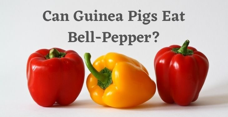 Can Guinea Pigs Eat Bell Pepper